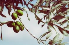 Arbres et plantes dans la tradition chrétienne